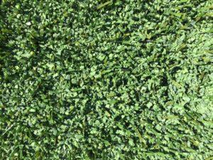 gomma verde nell'intaso di un campo calcetto
